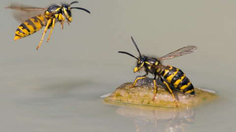 """Wespen bestechen bei Fotowettbewerb """"Glanzlichter"""""""