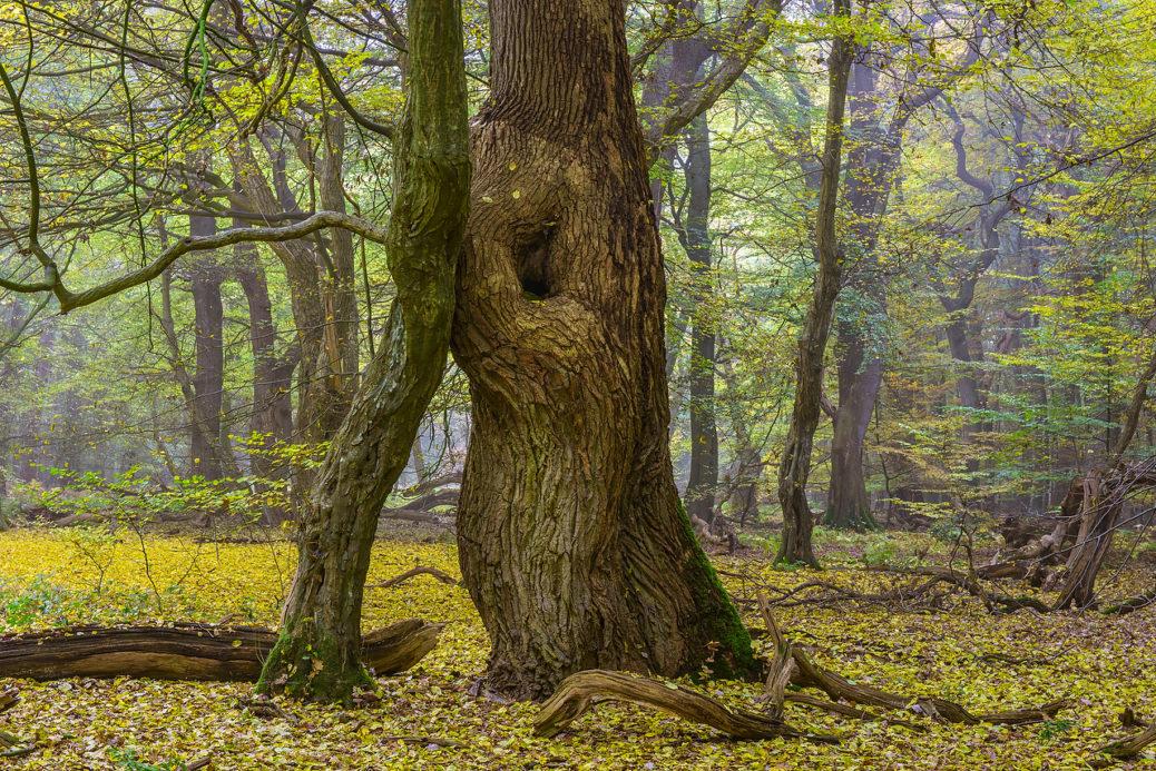 Herbst im Urwald Baumweg