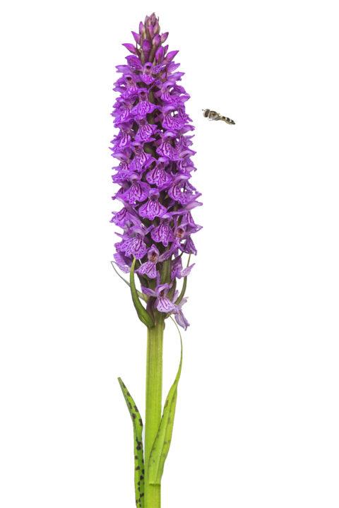 Orchideen: Neue Galerie eingerichtet
