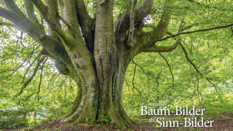 Baum-Bilder als Sinn-Bilder