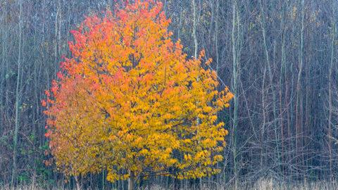 Naturfotografie mal anders – herzliche Einladung