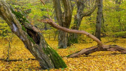 Die Suche nach dem perfekten Herbstbild