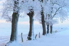 Raureif auf winterlichem Baum